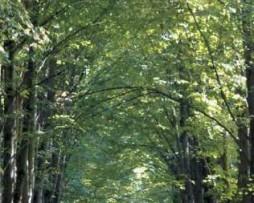 תמונת טפט צל העצים