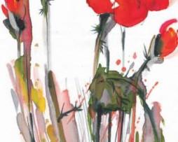 תמונת טפט פרח פרג