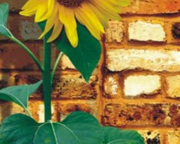 תמונת טפט פרח צהוב