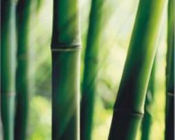 תמונת טפט במבוק