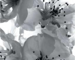 תמונת טפט פרחים שחור לבן