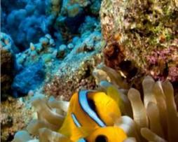 תמונת טפט דגים במעמקים
