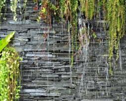 תמונת טפט בריקים עם צמחייה
