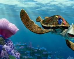 תמונת טפט צב ים נמו