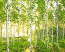 תמונת טפט עצים ביער