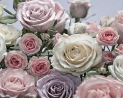 תמונת טפט פרחי שושן