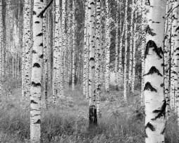 תמונת טפט עצים