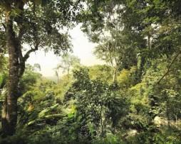תמונת טפט ג'ונגל מצויר