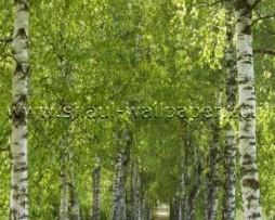 תמונת טפט לדלת חורשת עצים