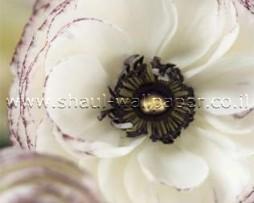 תמונת טפט לדלת פרח