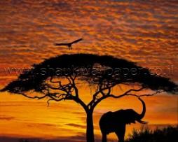 תמונת טפט שקיעה באפריקה
