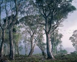 תמונת טפט יער חלומי