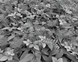 תמונת טפט רצפת היער