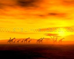 תמונת טפט תלת מימד ג'ירפות במדבר