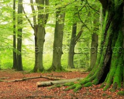 תמונת טפט תלת מימד יער ירוק