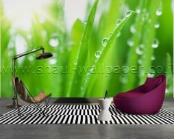 תמונת טפט תלת מימד גשם על הדשא