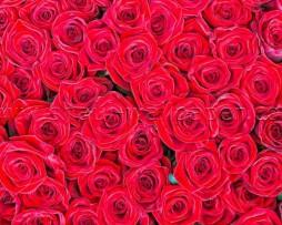 תמונת טפט תלת מימד ורדים אדומים