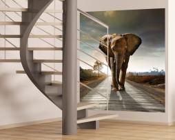 תמונת טפט לקיר פיל בשביל