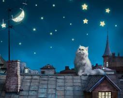 תמונת טפט לקיר חתול על גג